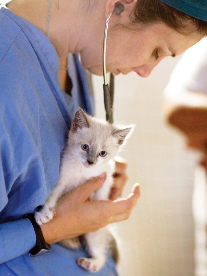 a vet holds a kitten while listening to its heartbeat