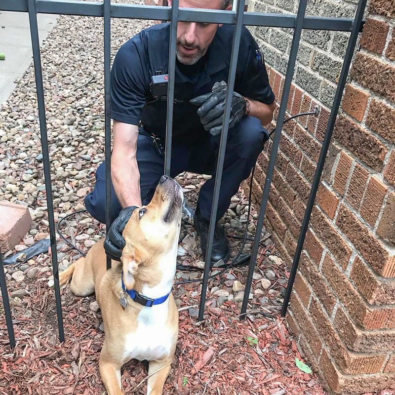 an animal protection officer reaches through a fence to pet a dog