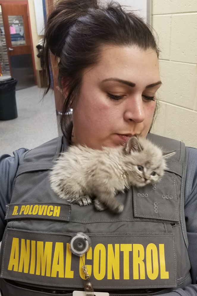 a small kitten rests on an animal control officer's chest