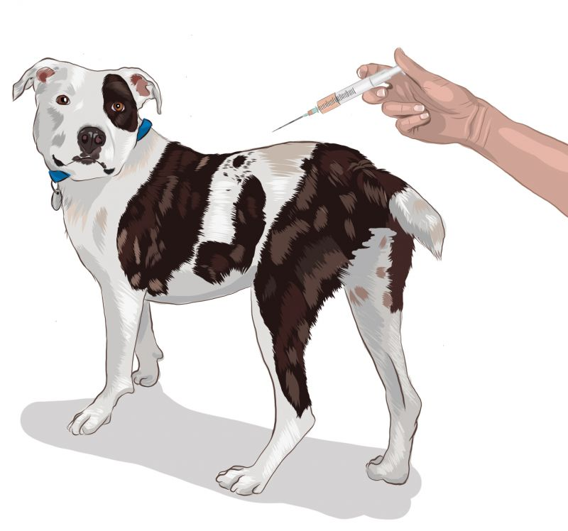 an illustration of a dog getting a shot