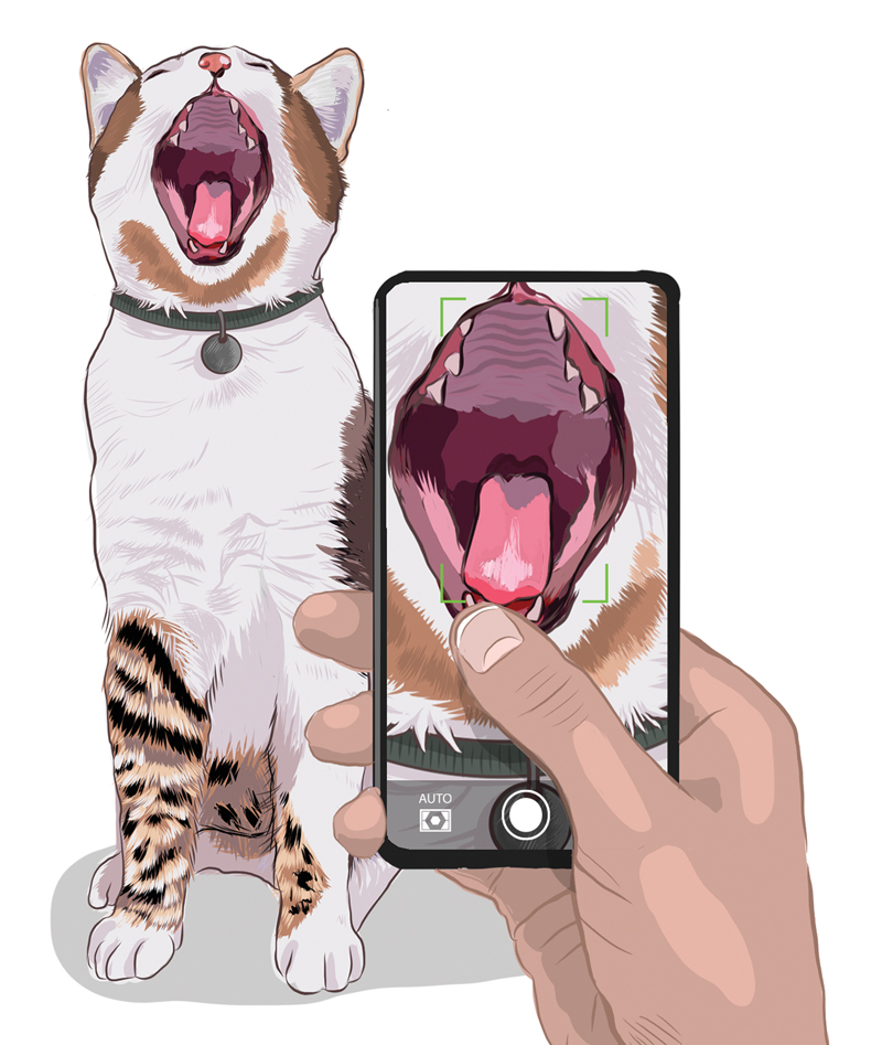 illustration of a person taking a picture of their cat's mouth