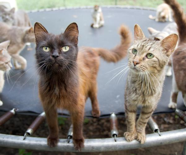 a group of cats standing on a trampoline