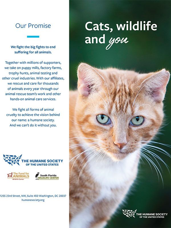 Cats, Wildlife and You Brochure
