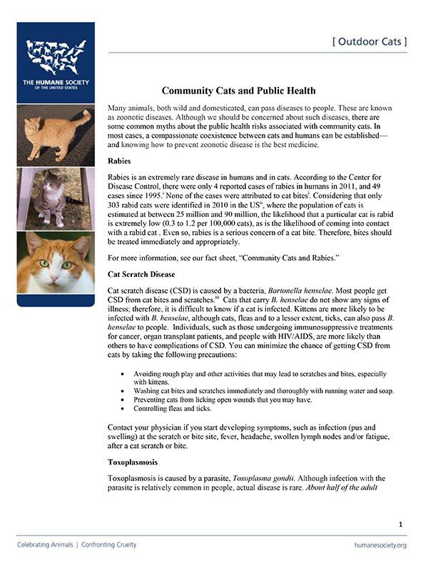 Community Cats and Public Health