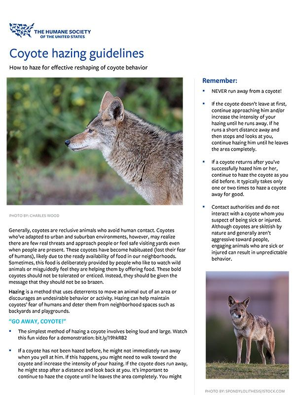 Coyote Hazing Guidelines Fact Sheet