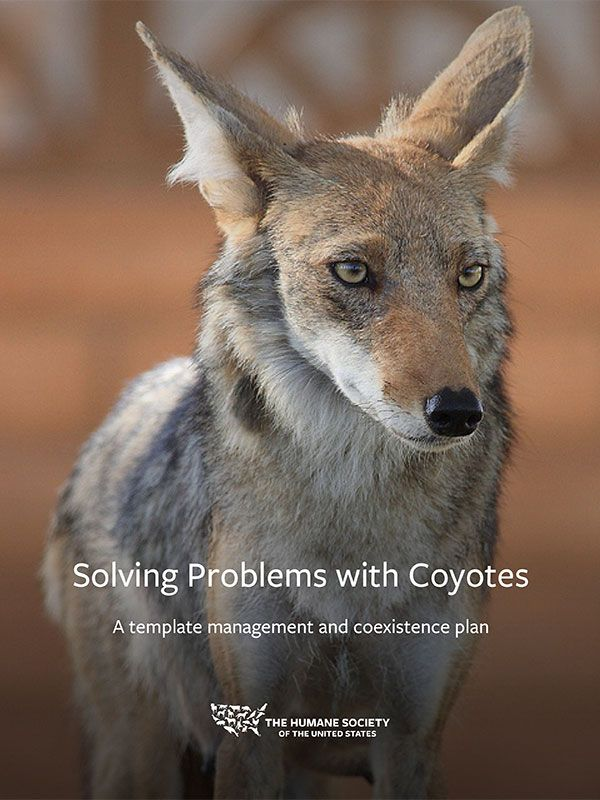 Template Coyote Management and Coexistence Plan