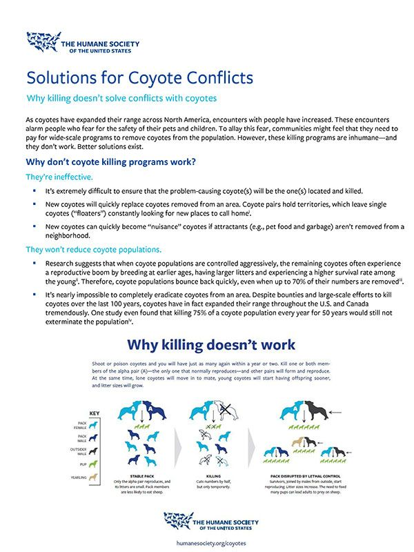 Solutions for Coyote Conflicts