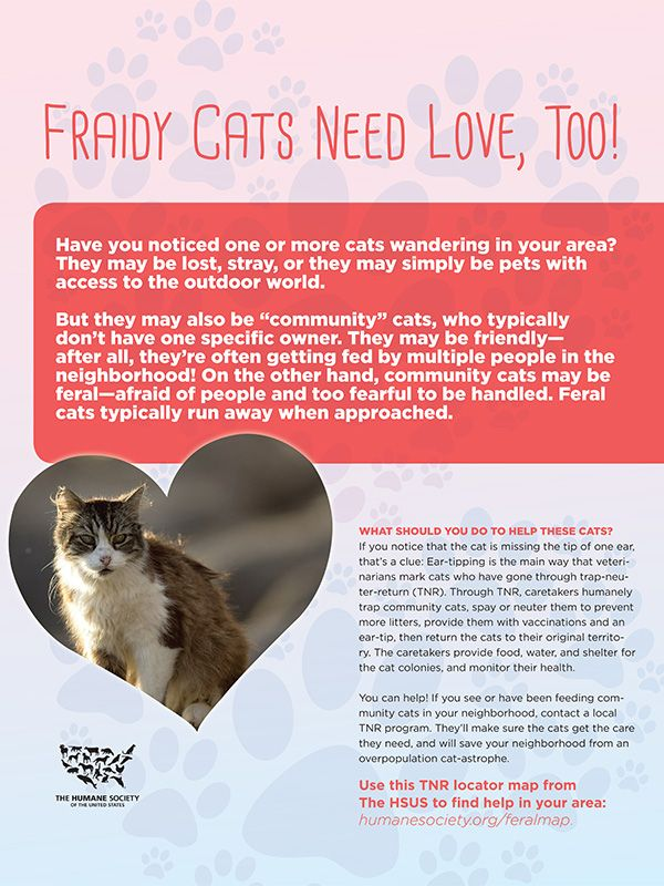 Fraidy Cats Need Love, Too!