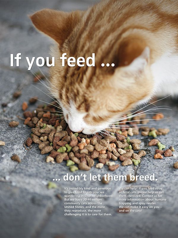 If you feed...don't let them breed
