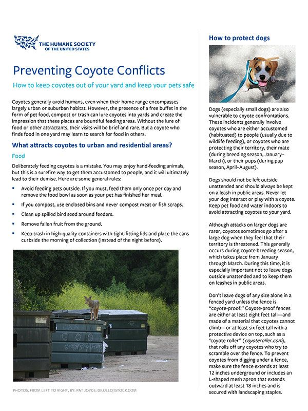 Preventing Coyote Conflicts Fact Sheet
