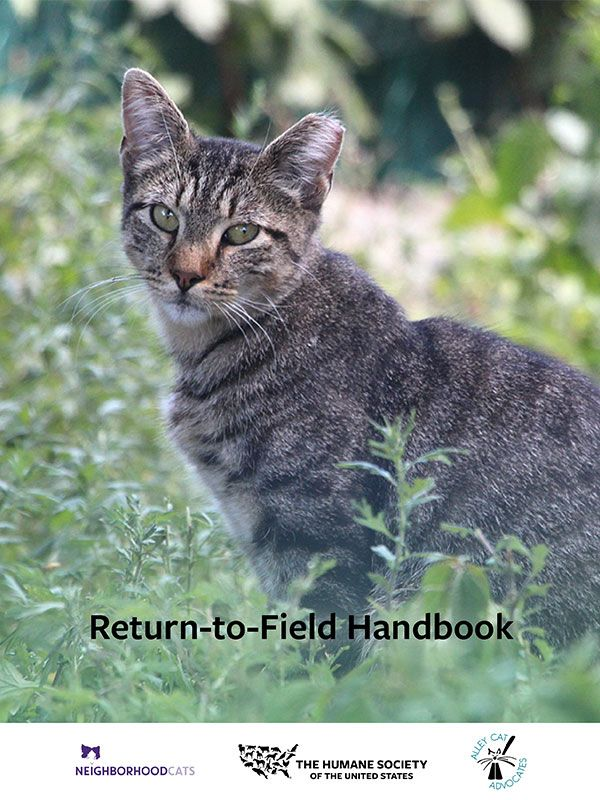 Return to Field Handbook