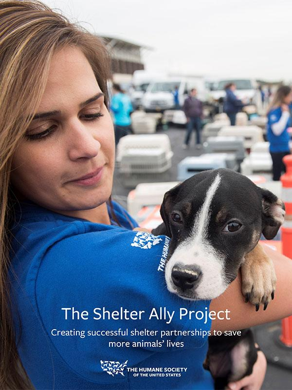 The Shelter Ally Project