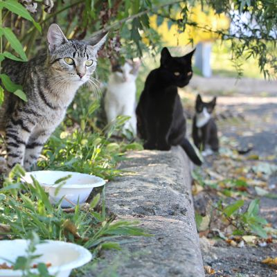 a group of community cats stand near food bowls on a curb