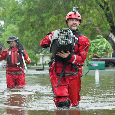 three men wade through knee deep water carrying animals in crates