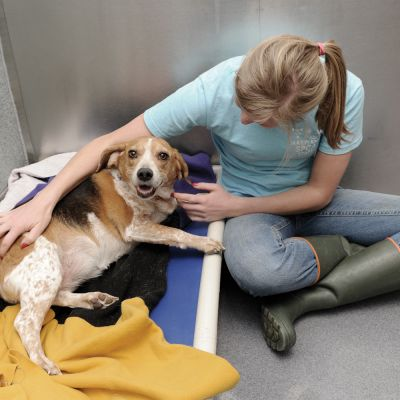 a woman comforts a dog lying on a bed