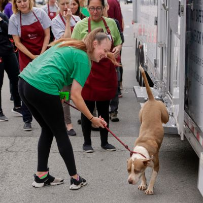 a woman helps a dog exist a transport vehicle