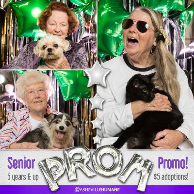 collage of senior citizens posing with shelter pets in front of a prom backdrop