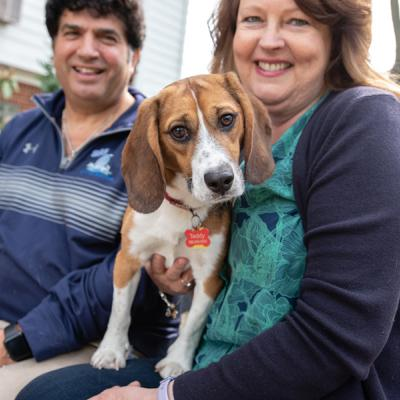a former laboratory beagle with his new family