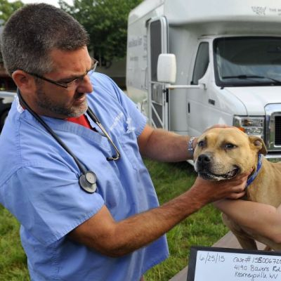 a woman holds a dog while a vet examines it