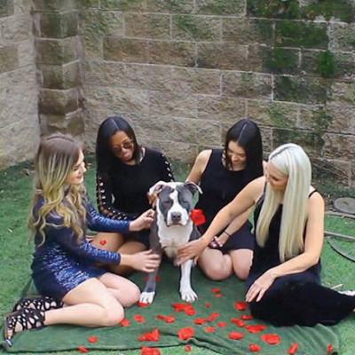 The ladies of Front Street Animal Shelter vie for handsome Colton's affections