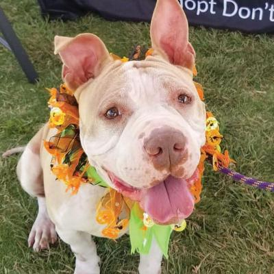 Melo represents the group at Camp Bow Wow's Give a Fetch event