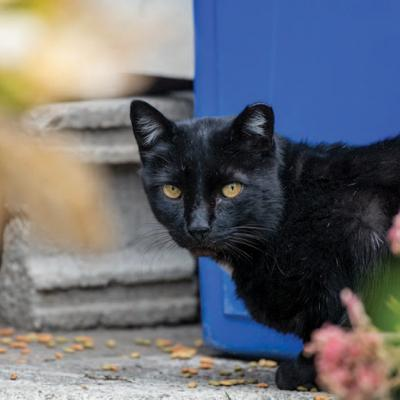 Cat next to recycling bin
