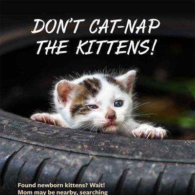 Don't cat-nap the kittens!