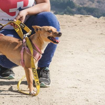 Popular with tourists, Free Animal Doctor's hikes with rescue dogs help fund veterinary care for animals in need