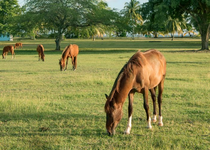 a group of horses grazing on grass