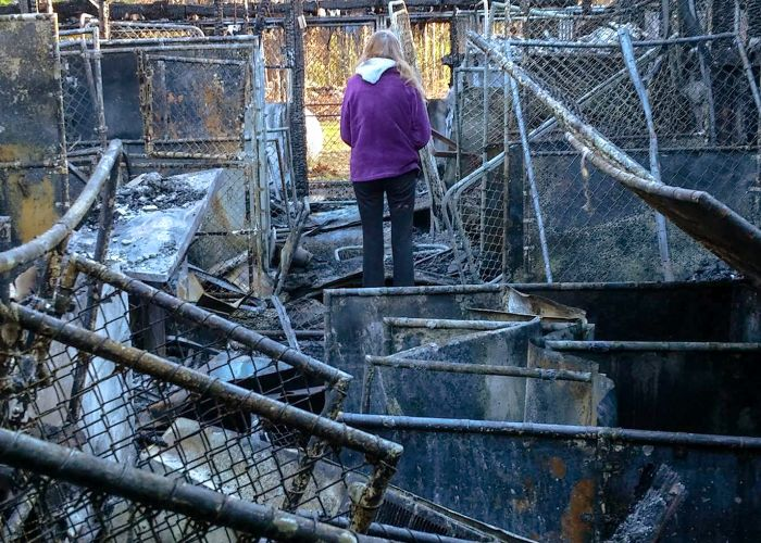 a woman stands amidst the debris of a burned shelter