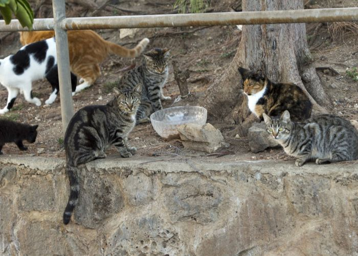 a group of community cats gathered around a bowl