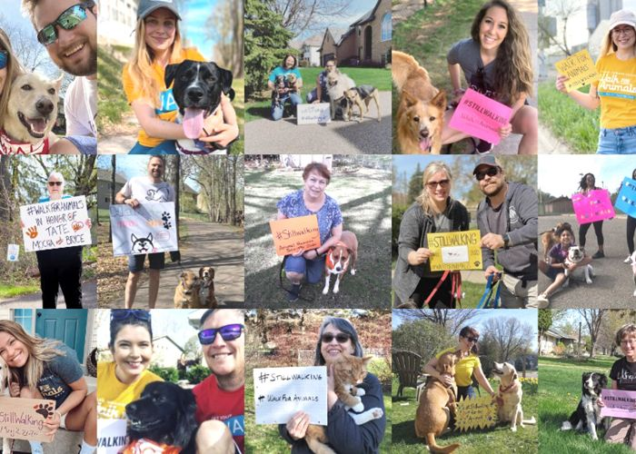collage of people with foster pets