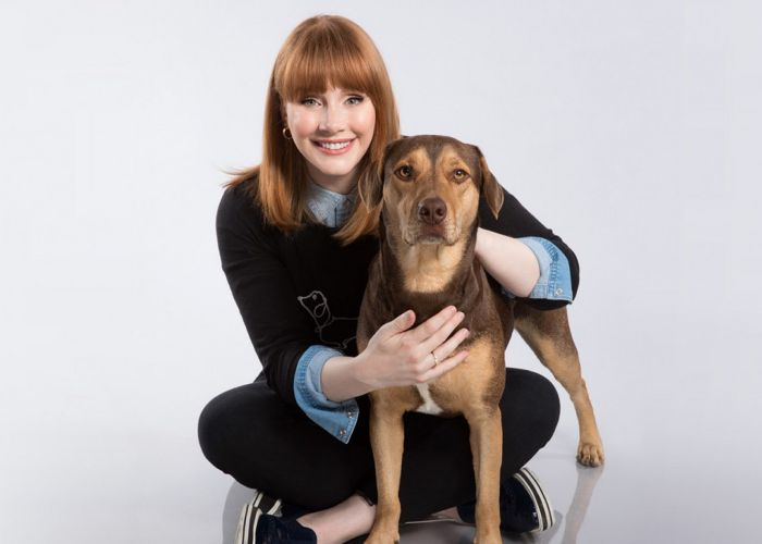 actress bryce dallas howard poses with a dog