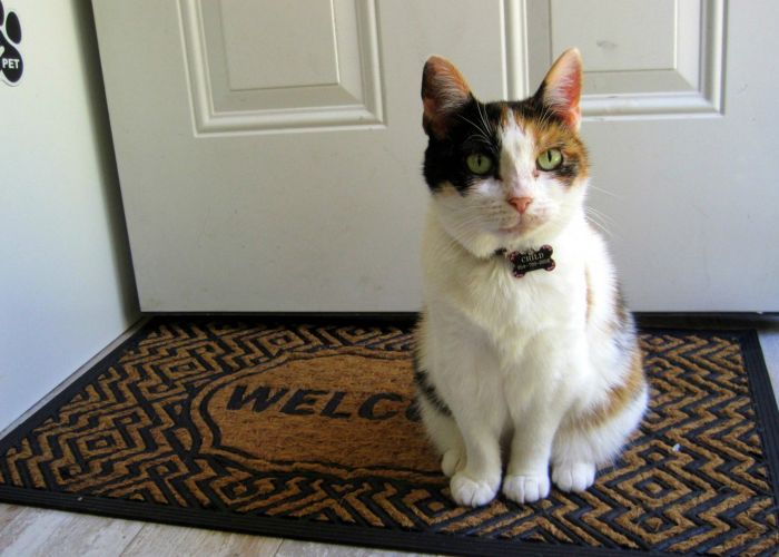 cat sitting in front of a door on a welcome mat
