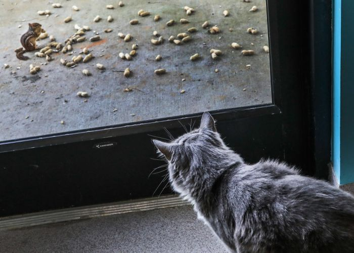 a cat watching a chipmunk through a glass door
