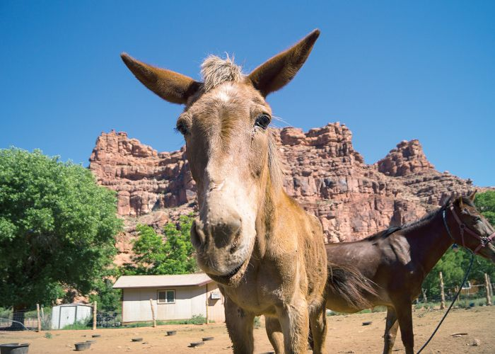 a donkey and horse stand in front of a small house in the shadow of a large boulder