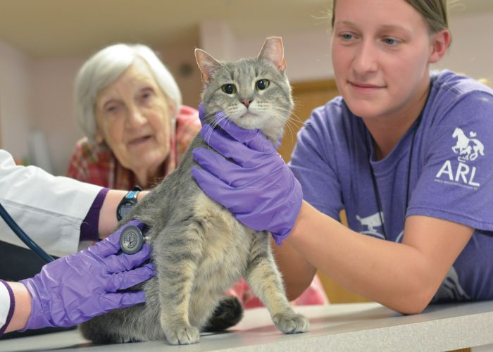 a cat is examined by a veterinarian while its owner looks on