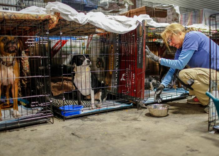 a woman brings water to pets in kennels
