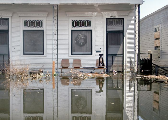 a dog sits on a flooded porch