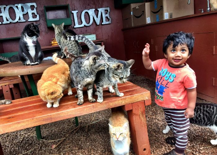 a toddler approaches a group of cats sitting on tables