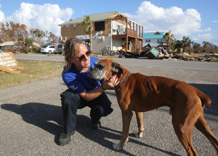a rescue team member kneels next to a dog with a destroyed house in the background