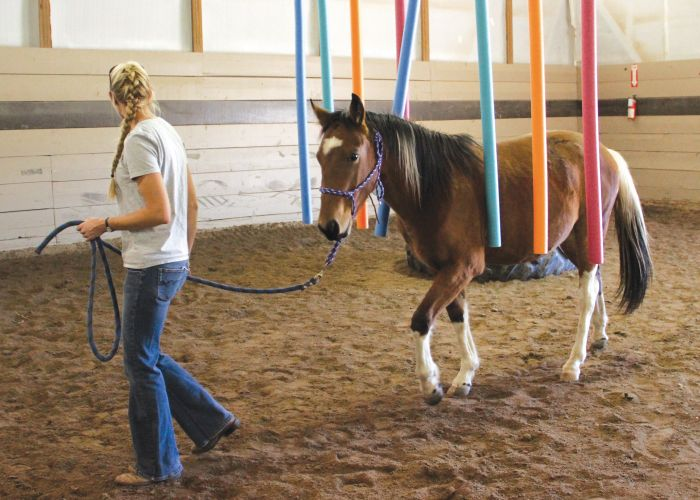 a woman guides a horse through a series of colored beams