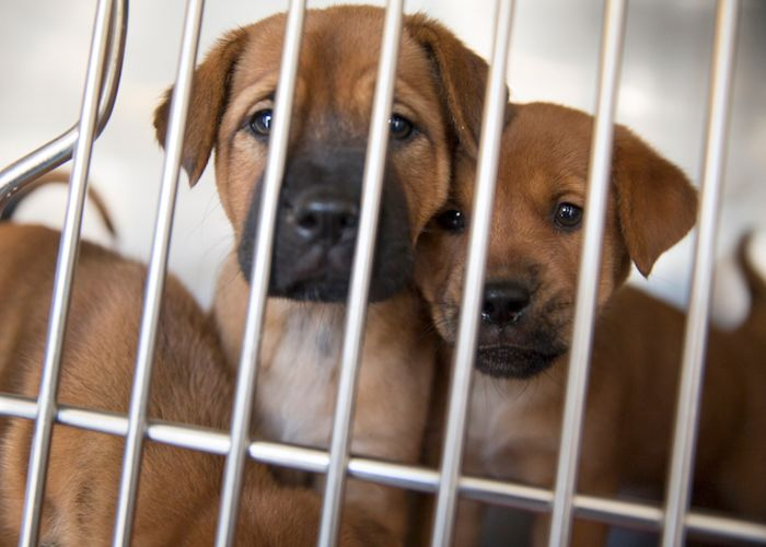 two puppies staring out of a kennel