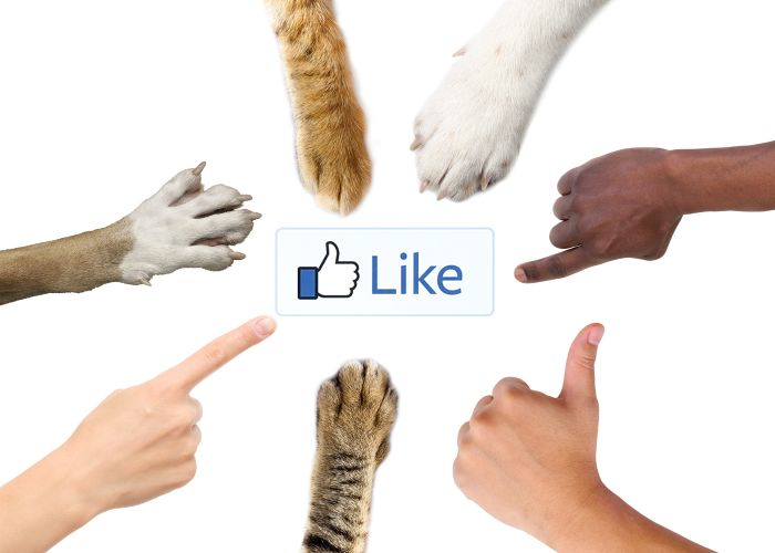 the facebook like button surrounded by human hands and animal paws