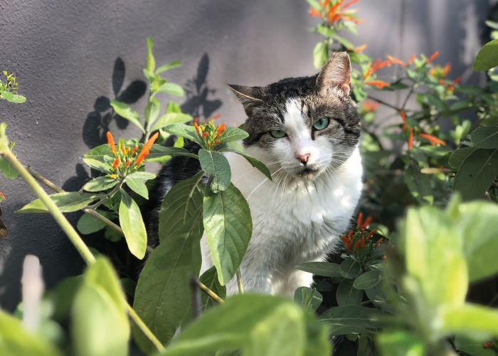 a cat sitting in a garden