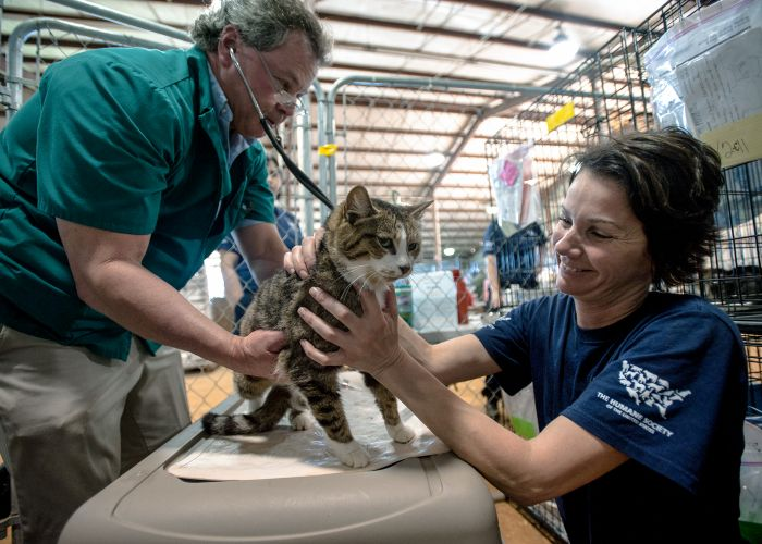 a vet examines a cat while a woman comforts it