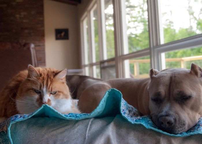 a cat and dog relaxing side by side