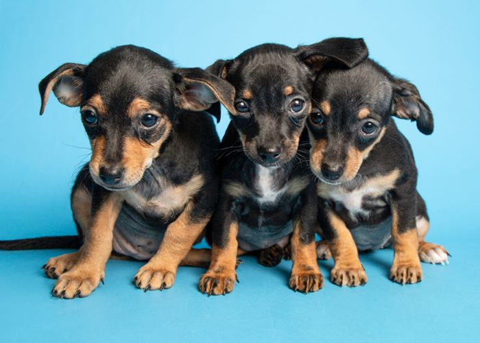 three small puppies