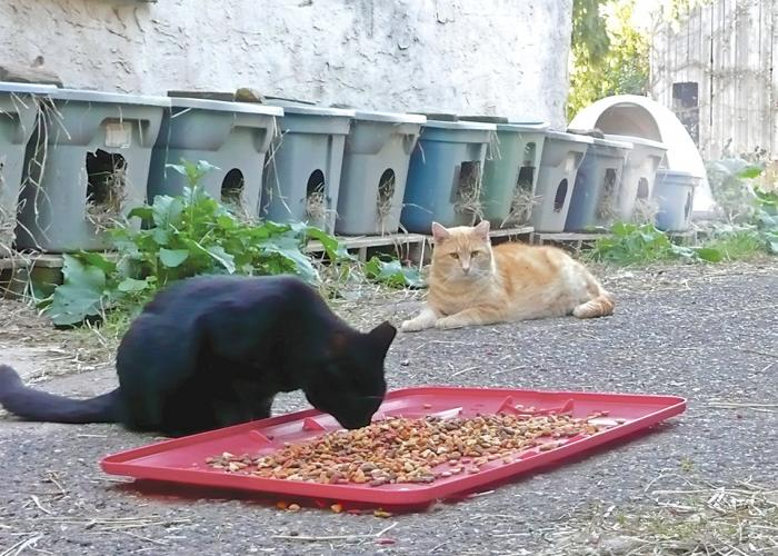 Cats outside eating food