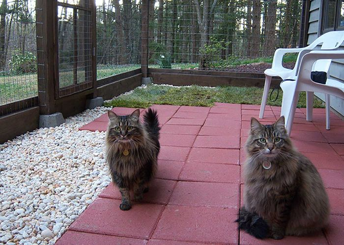 Two cats in a catio